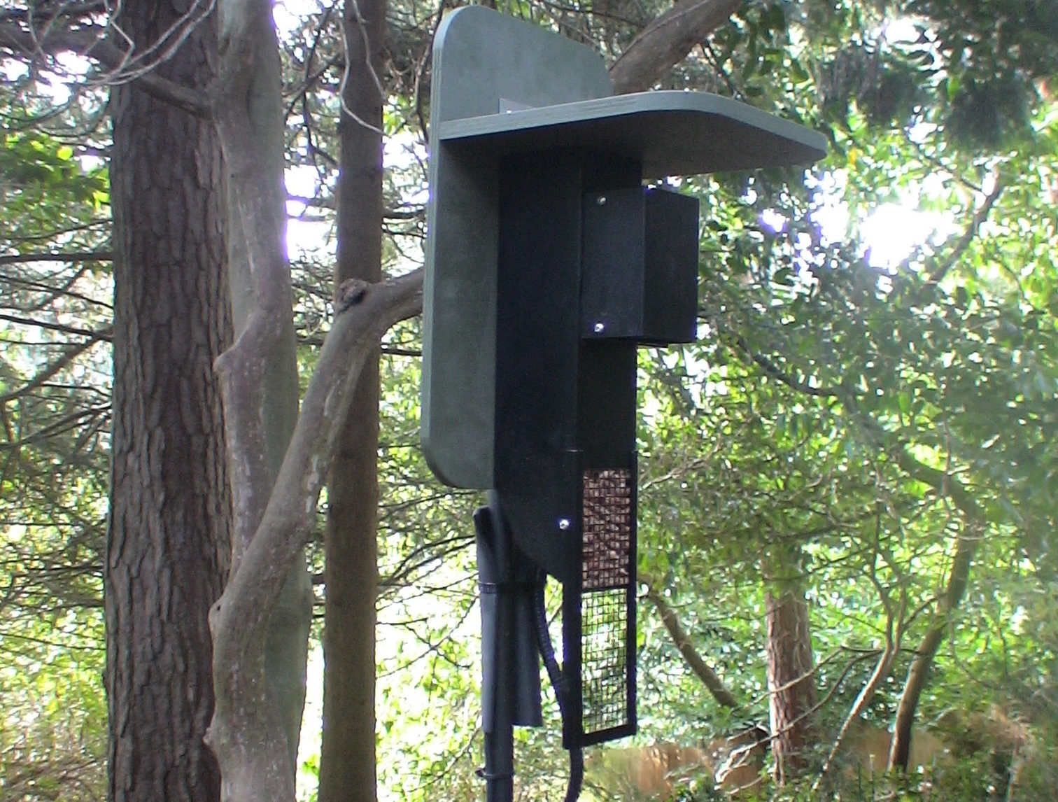 WW peanut feeder camera